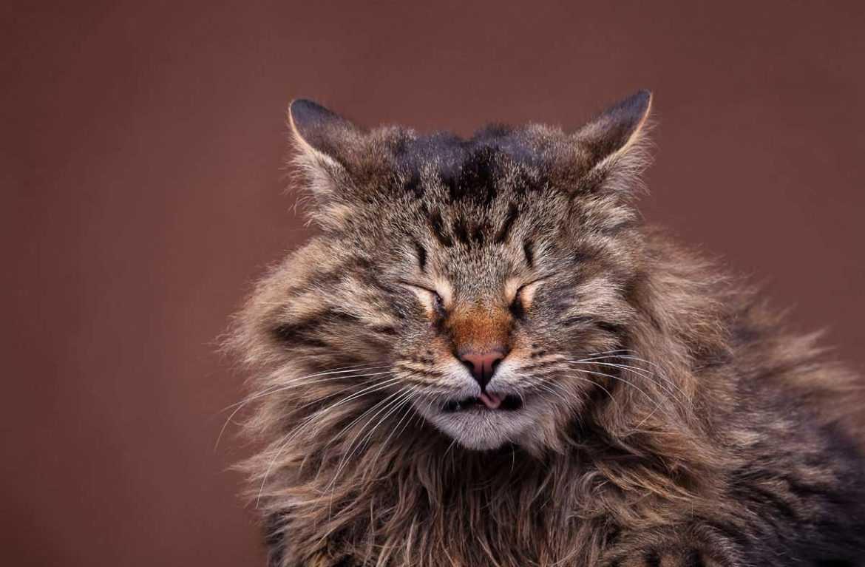 Кошка чихает