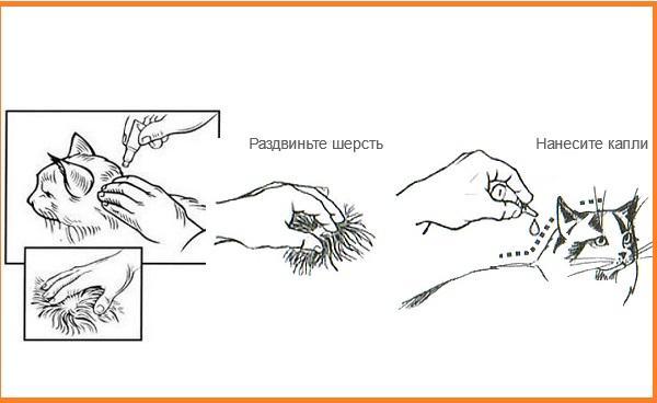 Правила нанесения препарата