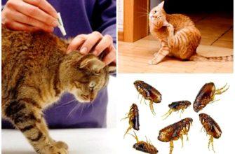 блохи у животных