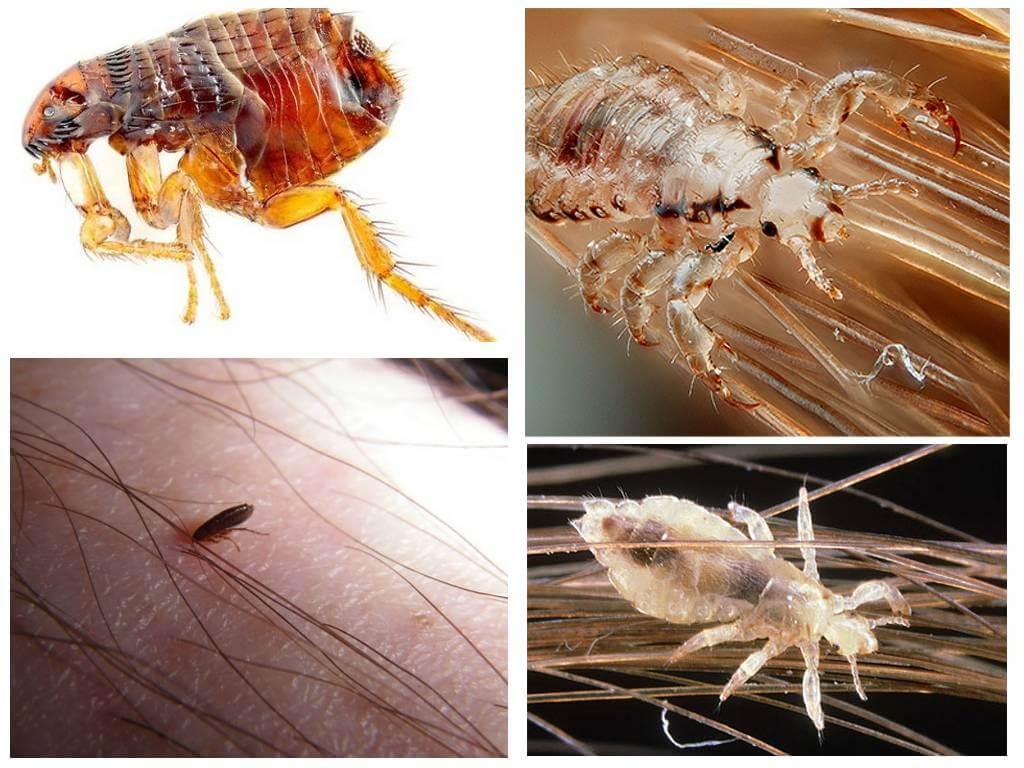Заражение паразитами